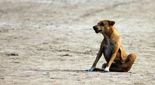 drbe se pes