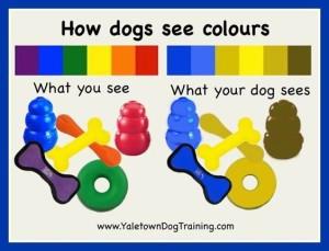 jak pes vidí barvy