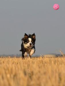 letní sport pes