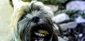 oslava pes