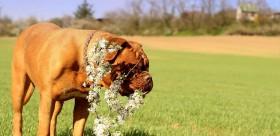 přírodní medicína psi
