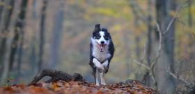pes na podzim v lese