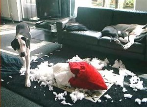 pes nepořádek