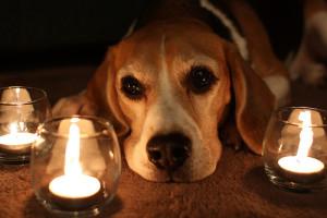 pes svíčka