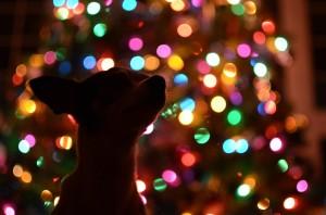 pes světýlka
