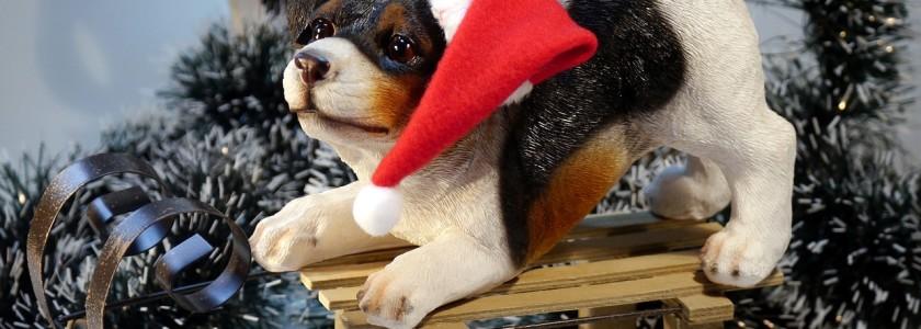 pes vánoce